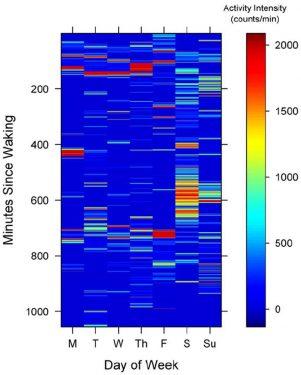 פעילות לאורך היום. צבע אדום=עצימות גבוהה. צבע כחול=עצימות נמוכה